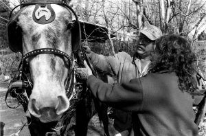 C. Marshall Cofer and Rebecca Austin work with draft horses. Photo by Morgan Miller/Virginia Folklife Program.